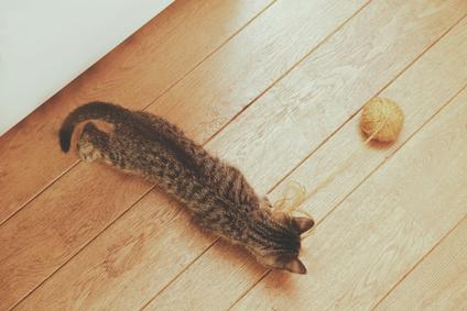 フローリングの上で猫が毛玉に夢中になっている