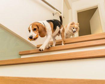 犬が家の階段を駆け下りている