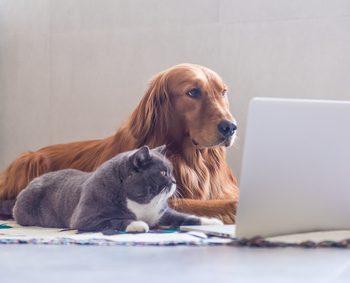 注文住宅と犬と猫の生活