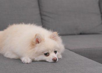 新築住宅に佇む犬