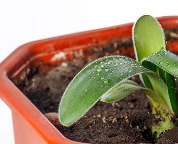 観賞植物 虫 小バエ
