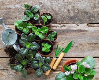 観葉植物 育てる